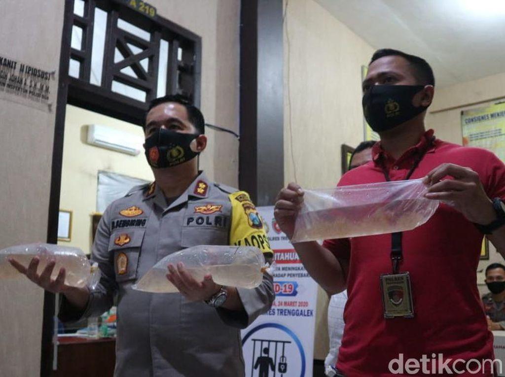 Pengepul Baby Lobster Tujuan Ekspor Ditangkap di Trenggalek