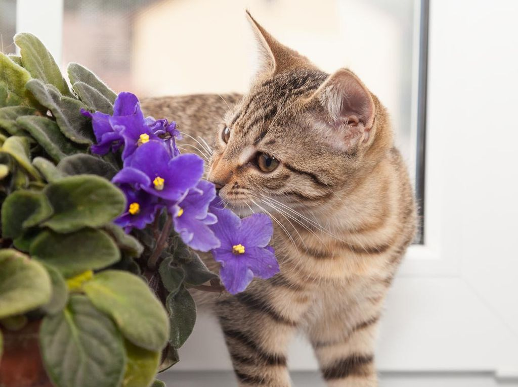 Sudah Diperiksa, Pria Diduga Aniaya Kucing di Serpong Ngaku Emosi