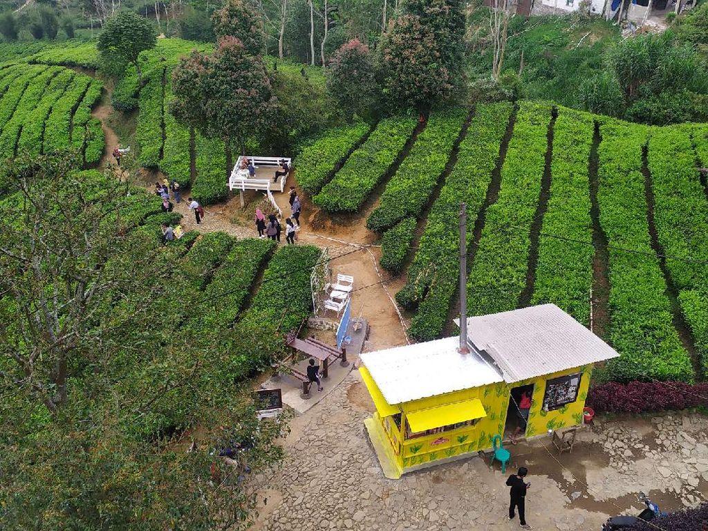 Wisata ke Kawasan Puncak Bogor? Ini 3 Lokasi yang Boleh Buka