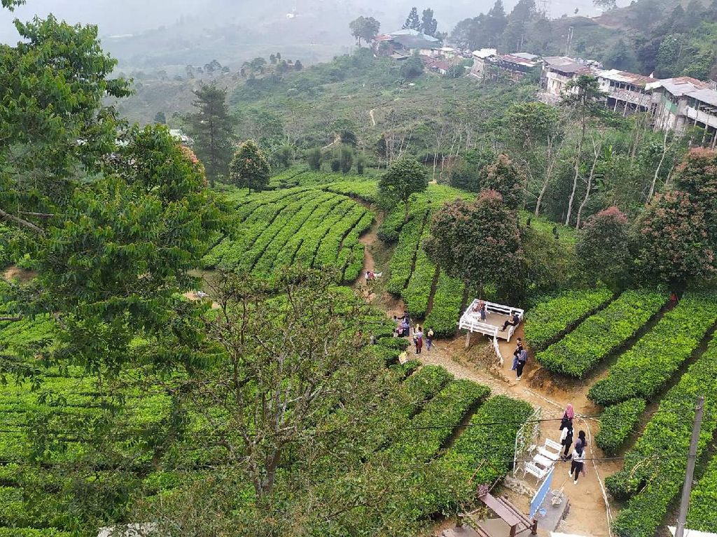 Deretan Foto Kebun Teh Gunung Mas yang Instagrammable