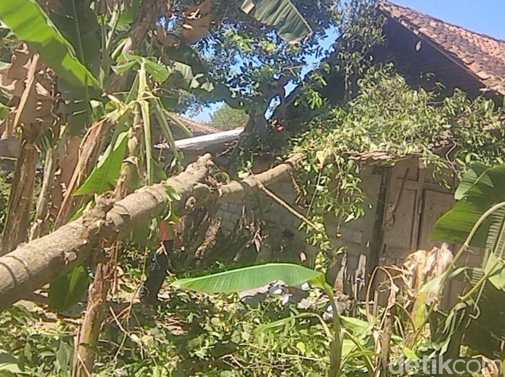 Angin Kencang Tumbangkan Sejumlah Pohon di Klaten