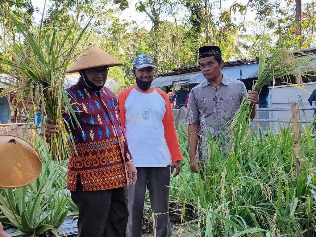 Kebun Cerdas Air, Salah Satu Metode Bertani di Lahan Kering