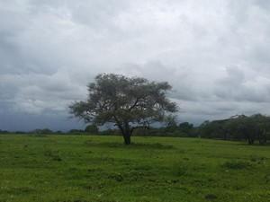 Ini Protokol Baru Berkunjung ke Taman Nasional Baluran
