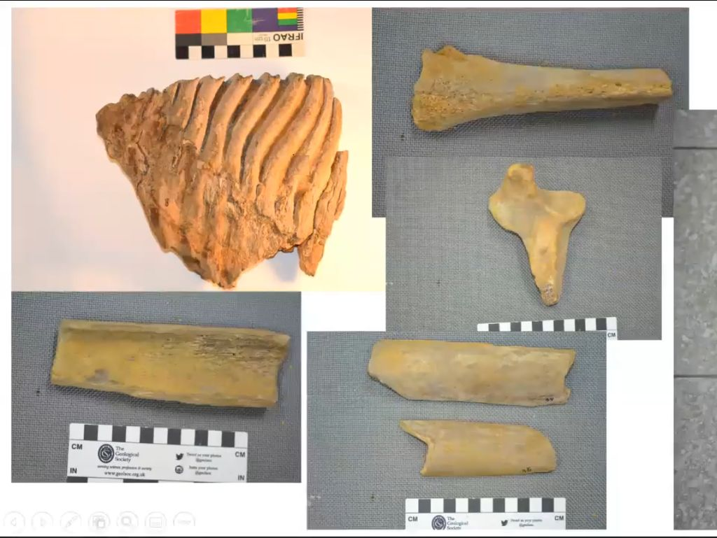 Fosil Gajah Ungkap Rahasia Pulau Bangka di Zaman Sundaland