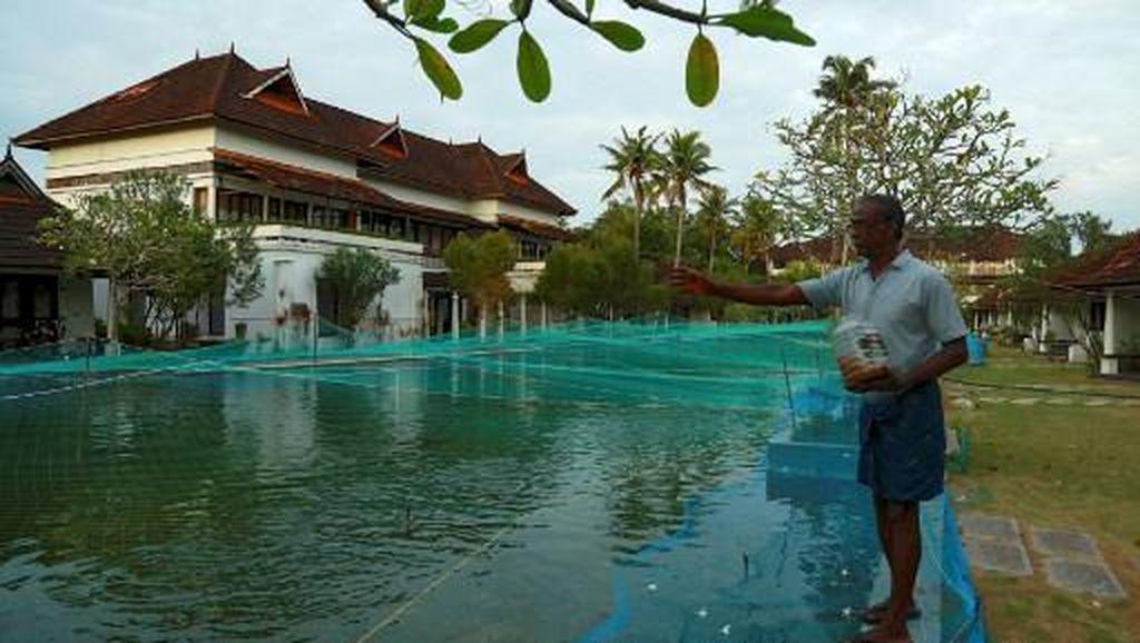 Sedih, Kolam Renang Resor Mewah Berubah Jadi Kolam Ikan