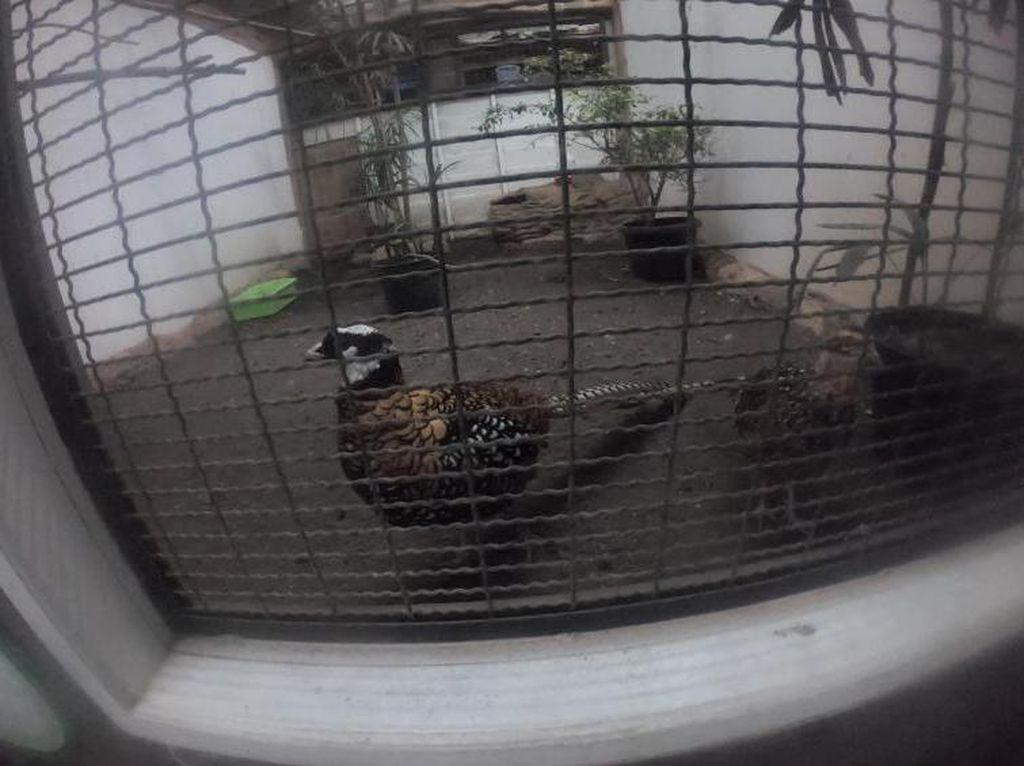 Bertemu si Cantik Ayam Hias di Eco Green Park