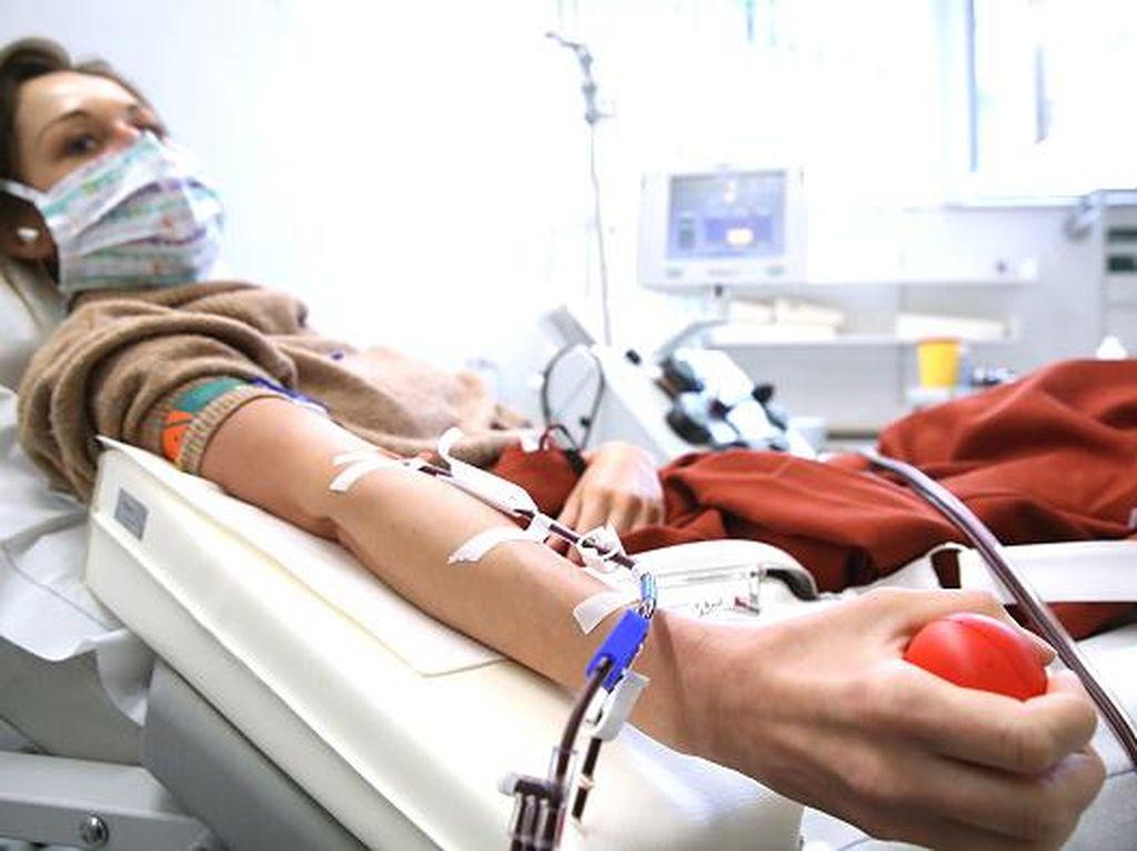 Terapi Plasma Disebut Tak Efektif Tekan Kematian COVID-19, Ini Hasil Studinya