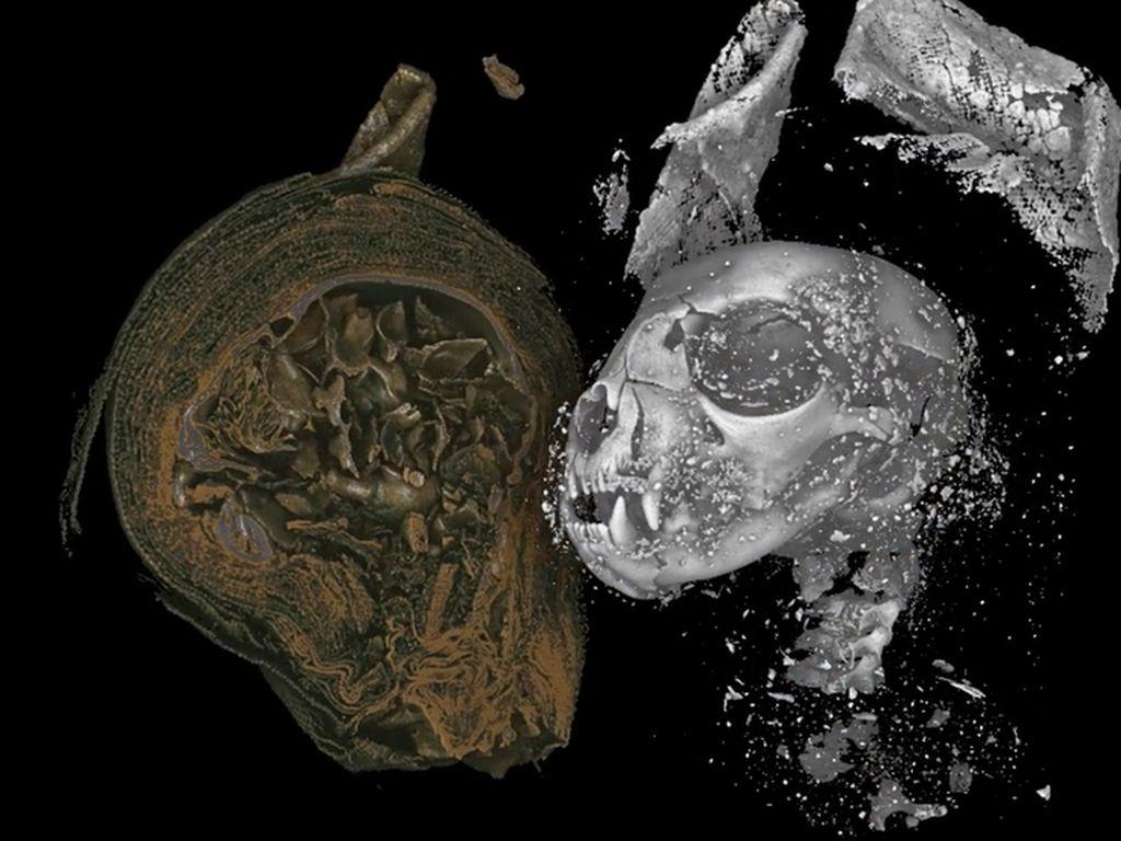 Mumi Hewan Mesir Usia 2.000 Tahun Dibedah Secara Digital dengan 3D