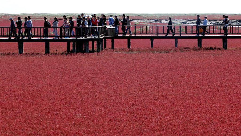 Foto: Pantai Merah yang Bukan Pantai di China