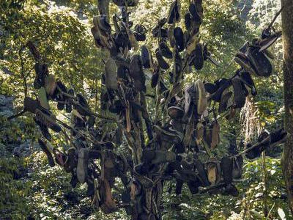 Ketemu Pohon Sepatu di Curug Lawe, Semarang