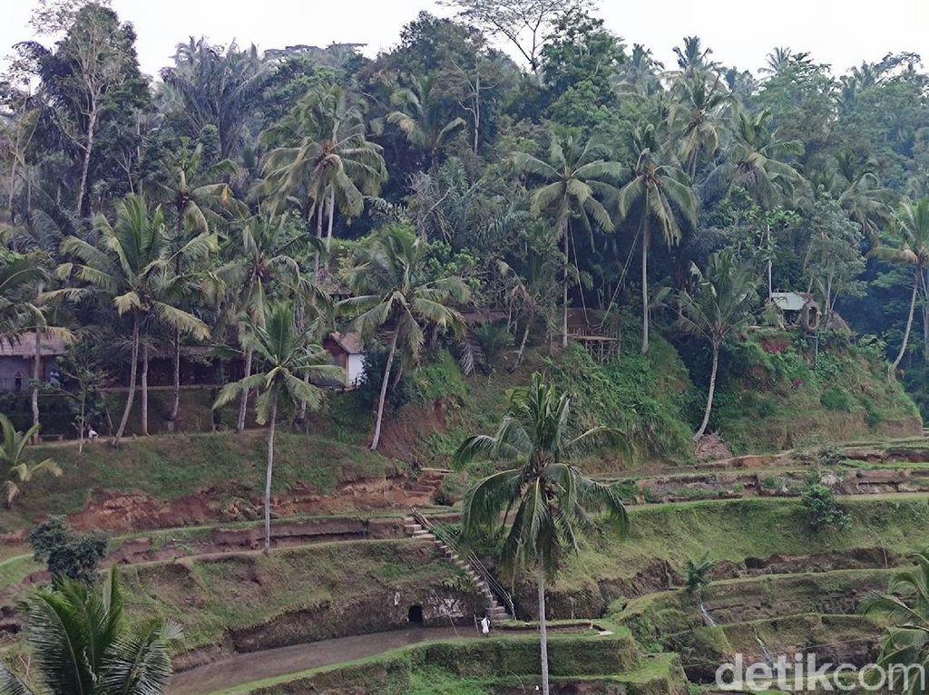 Melihat Lagi Keelokan Alami Tegallalang Bali