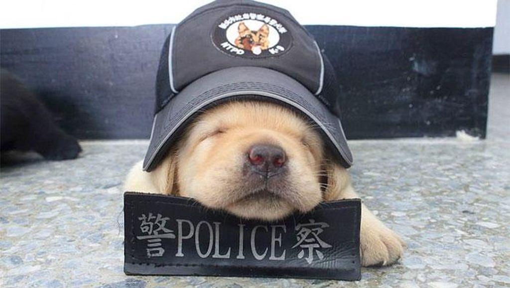 Potret Menggemaskannya Para  Anak Anjing Polisi