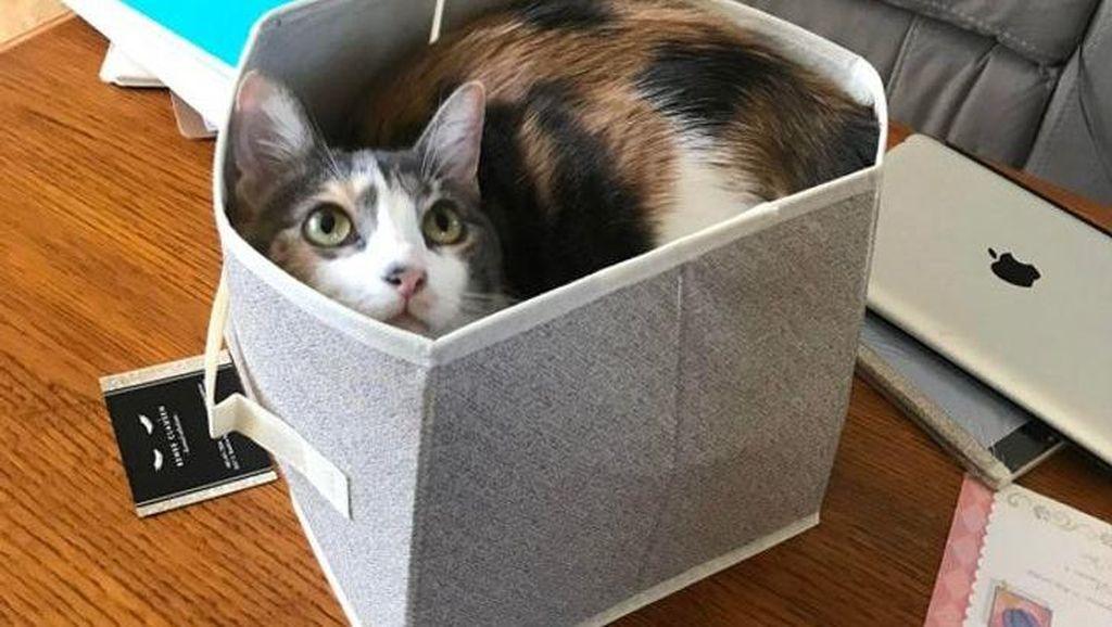 Potret Menggemaskan Kucing Lebih Suka Tempat Kecil, Ini Alasannya
