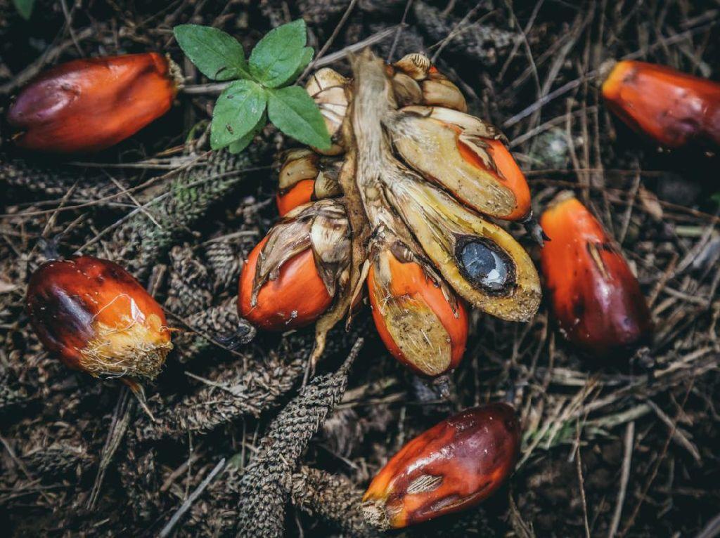 Dorong Serapan Minyak Sawit, RSPO Dukung Konsep Shared Responsibility