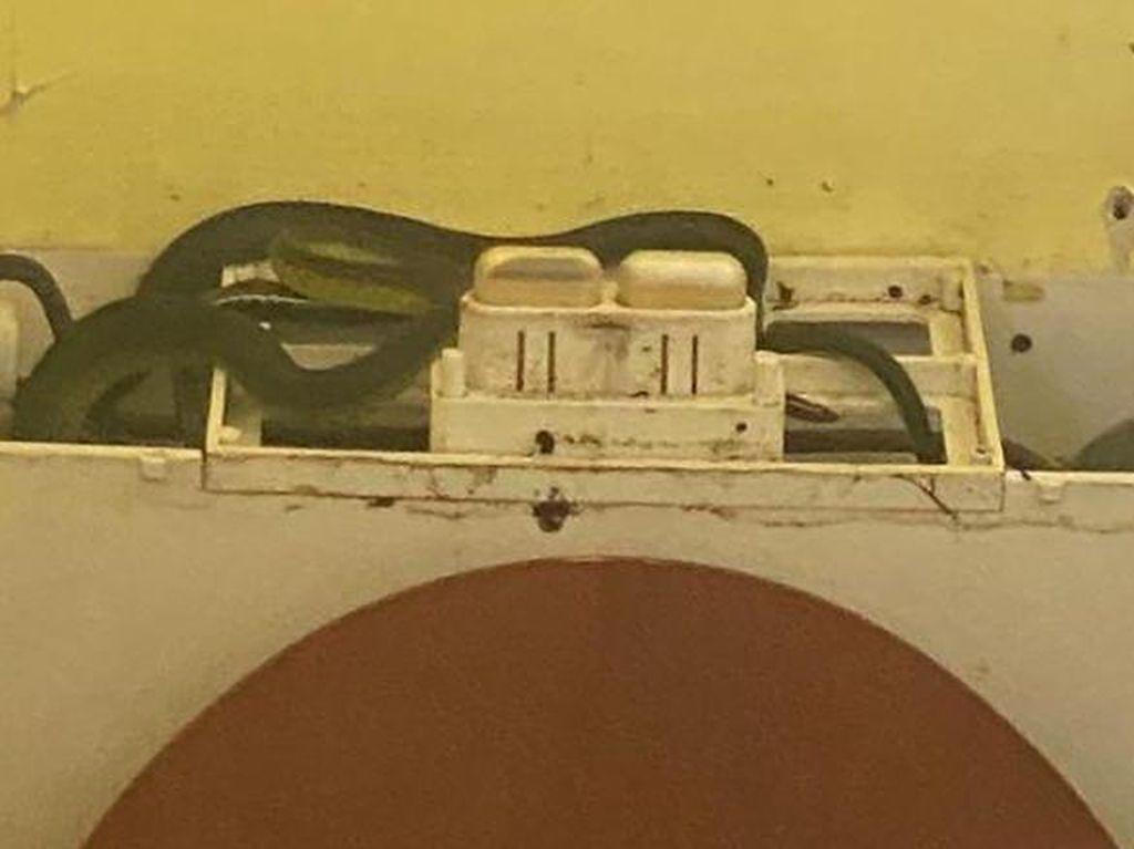Ngeri! Wanita Australia Temukan 4 Ekor Ular di Toiletnya