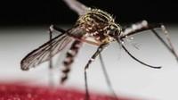 Foto: Fakta-fakta Menarik tentang Nyamuk