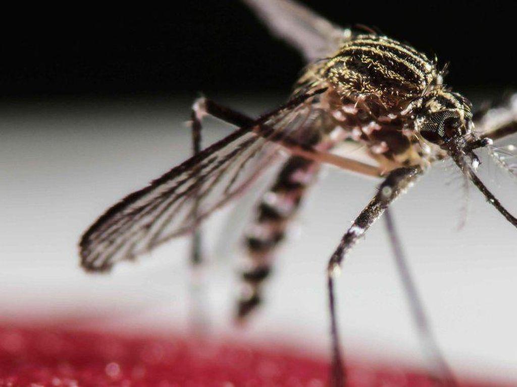 China Mau Basmi Nyamuk dengan Cara Ekstrem, Pakai Nuklir!