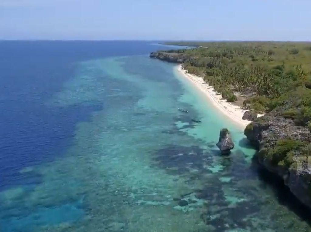 Tanaman Paling Mematikan di Dunia Ada di Maluku