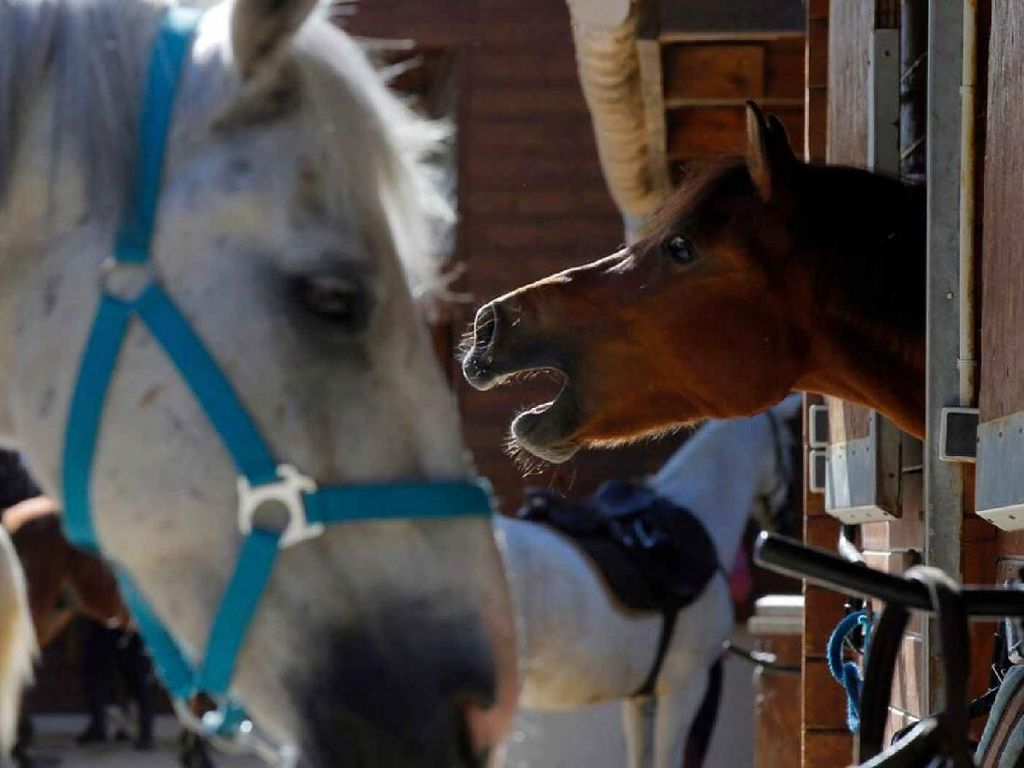 Puluhan Kuda Mati di Prancis, Diduga Korban Ritual Misterius