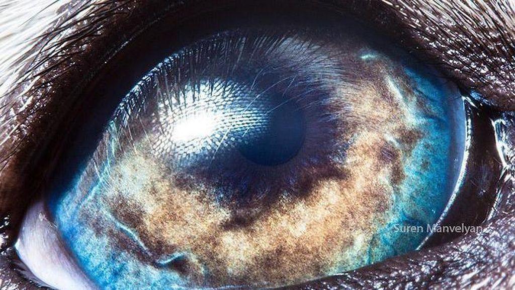 Melihat Kedahsyatan Ciptaan Tuhan Lewat Foto Makro Mata Hewan