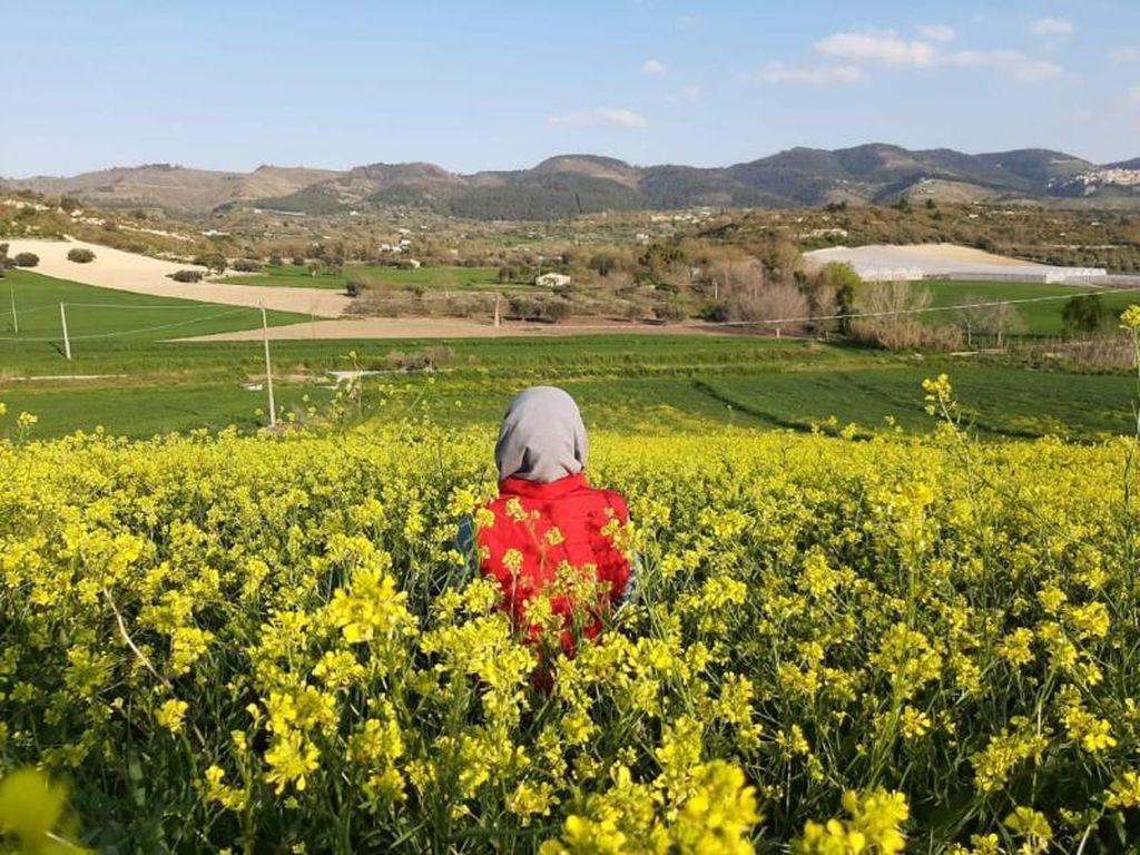 Pesona Panorama Perkebunan Sicilia di Italia
