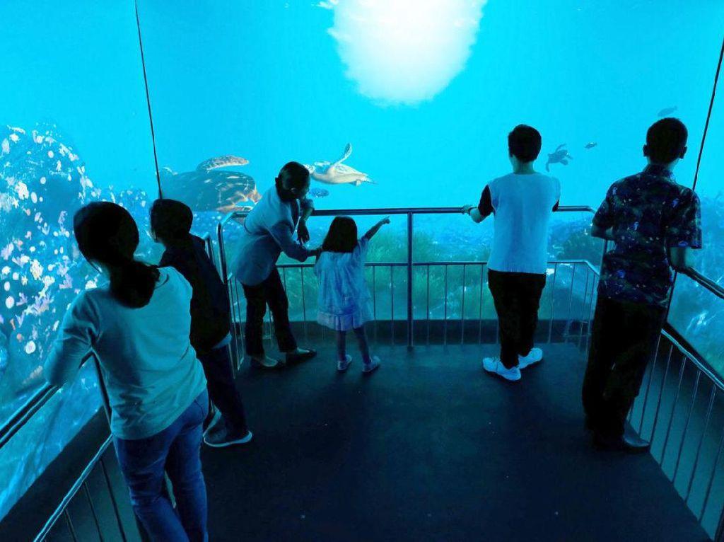 Aquarium Jakarta Ini Tawarkan Keajaiban dan Pesona Bumi