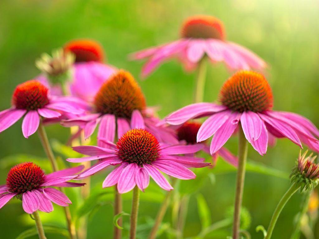 10 Tanaman Hias Ini Mudah Dirawat, Cocok Buat Pemula yang Mau Berkebun