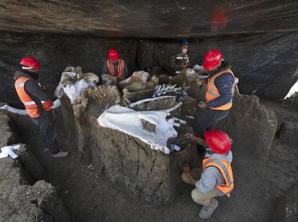 Kerangka Mammoth Ditemukan di Area Pembangunan Bandara Meksiko