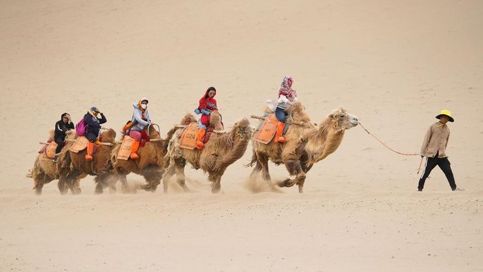 DUNHUANG , CHINA - APRIL 23:  Tourists rides on camels, walking on the desert on April 23, 2019 in Dunhuang, China. The Mingsha Shan desert (Mount Mingsha) is a part of the ancient silk road. Serving as an important platform for cultural exchange and economic cooperation among countries along the Belt and Road, Dunhuang City, which was a major stop on the ancient Silk Road. The 2nd