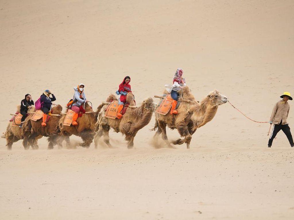 Di China Ada Wisata Naik Unta dan Oasis di Padang Pasir Lho