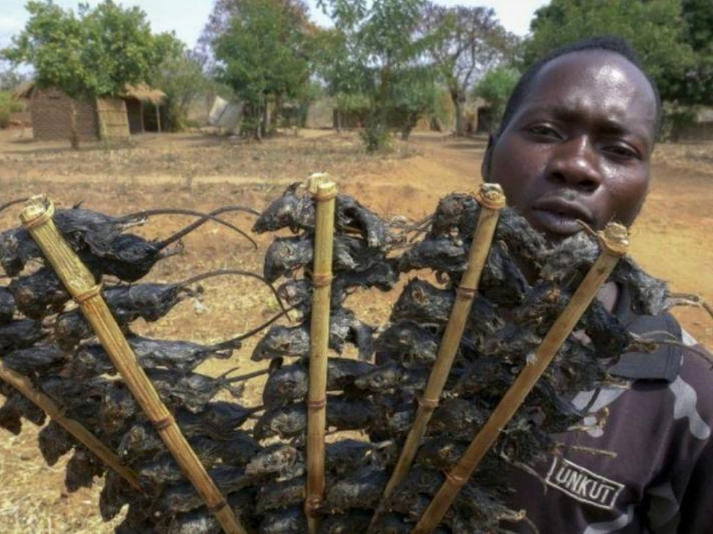 Imbas Corona, Orang di Afrika Makan Sate Tikus Untuk Atasi Kelaparan
