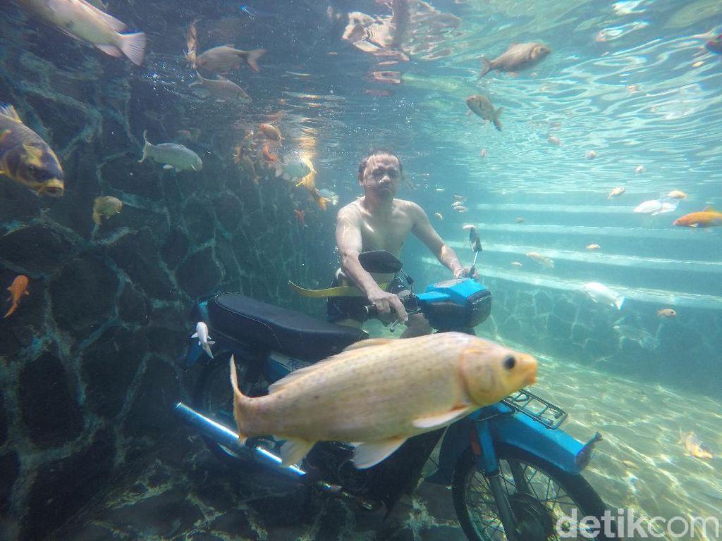 Berfoto di Underwater Woodland Kuningan yang Bikin Awet Muda