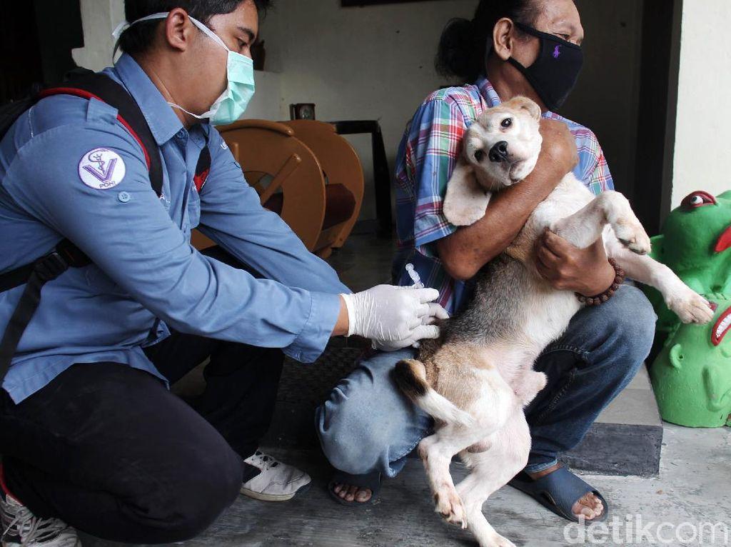 Ekspresi Anjing dan Kucing Saat Divaksin Rabies