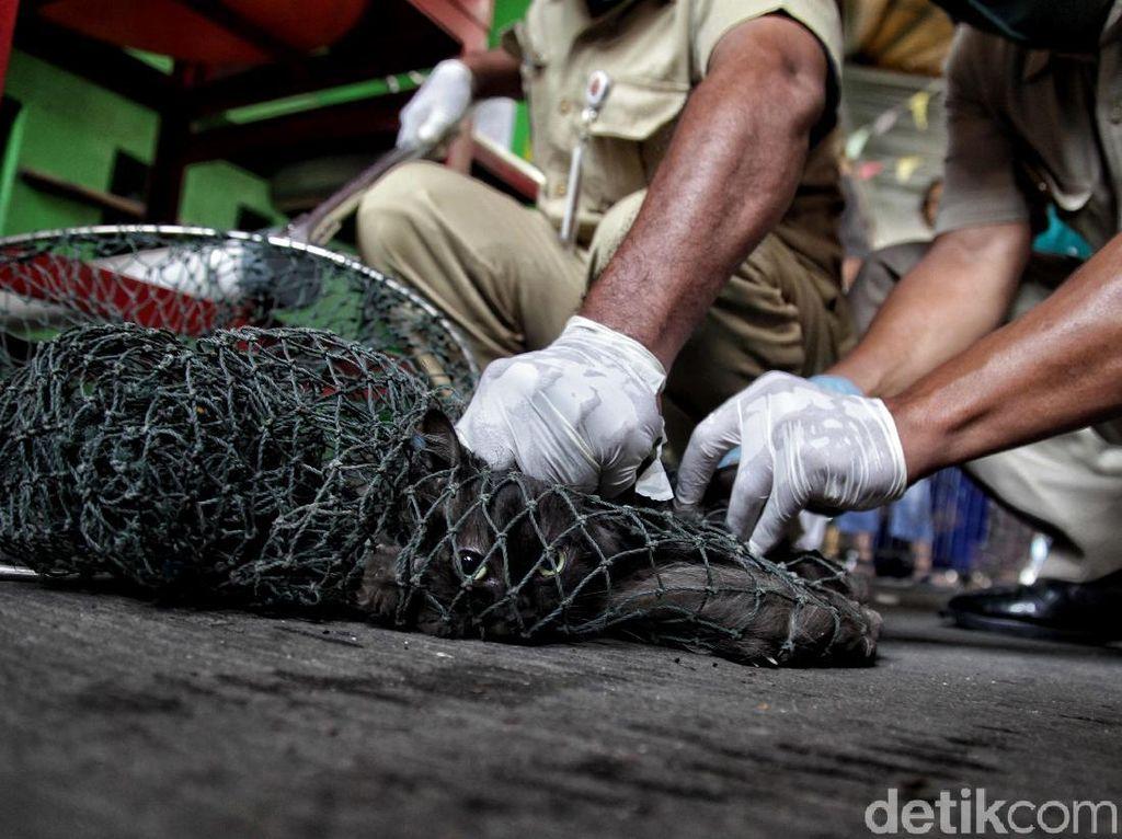 Tingkat Kematian 100 Persen, Baru 8 Provinsi RI yang Bebas Rabies