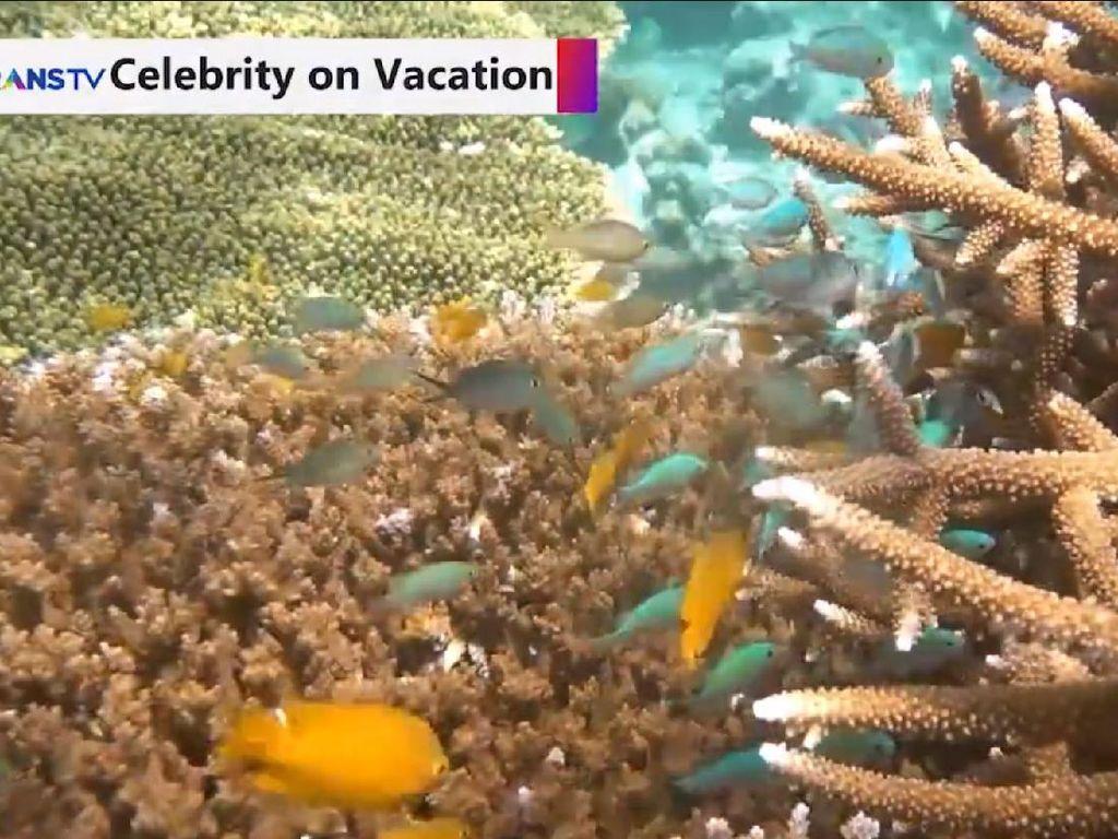 Celebrity on Vacation: Keindahan Bawah Laut Luwuk Sulteng