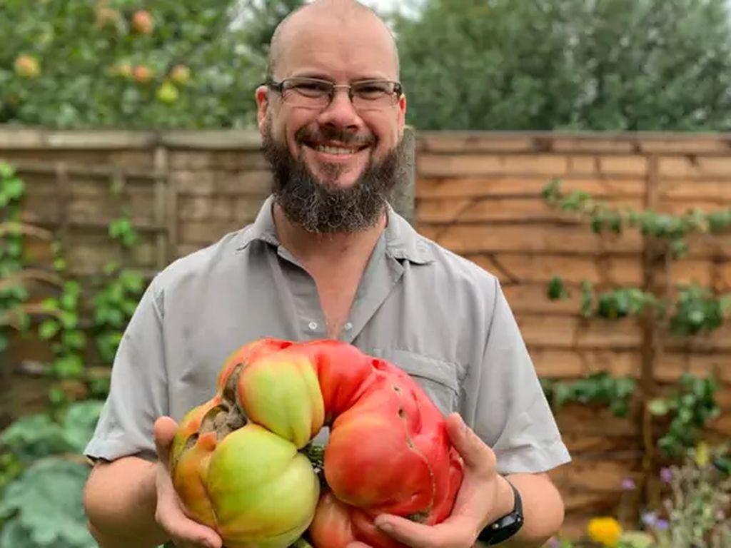 Pria Ini Berhasil Panen Tomat Jumbo 3 Kg dengan Bantuan Legging