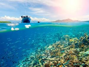 Unesco Akui 3 Cagar Biosfer Indonesia, Mana Saja?