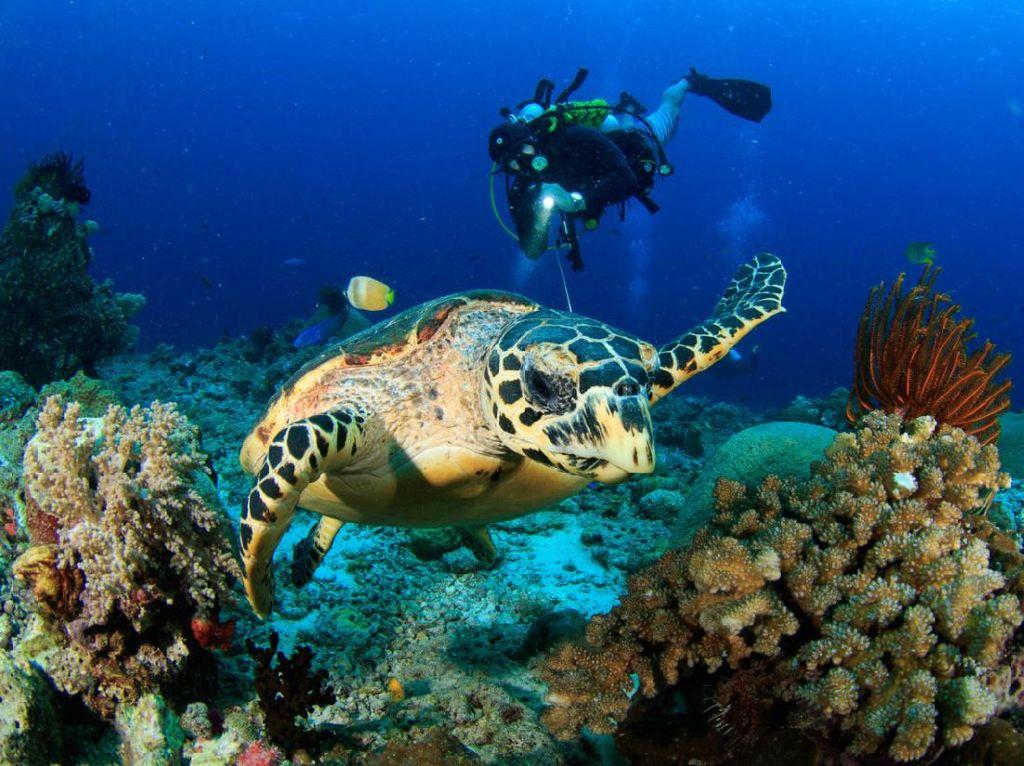 Jelajah Bawah Laut, Ini Titik Watersport Paling Indah di Indonesia