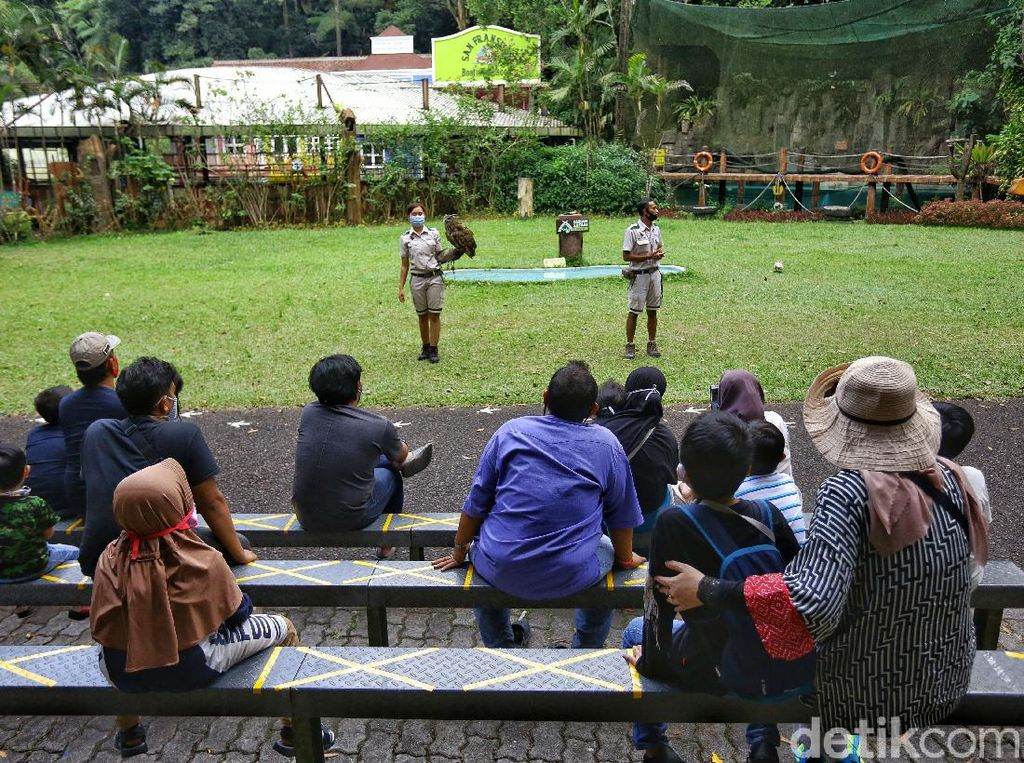 Cerita Suka Duka Para Keeper Hewan di Taman Safari Bogor