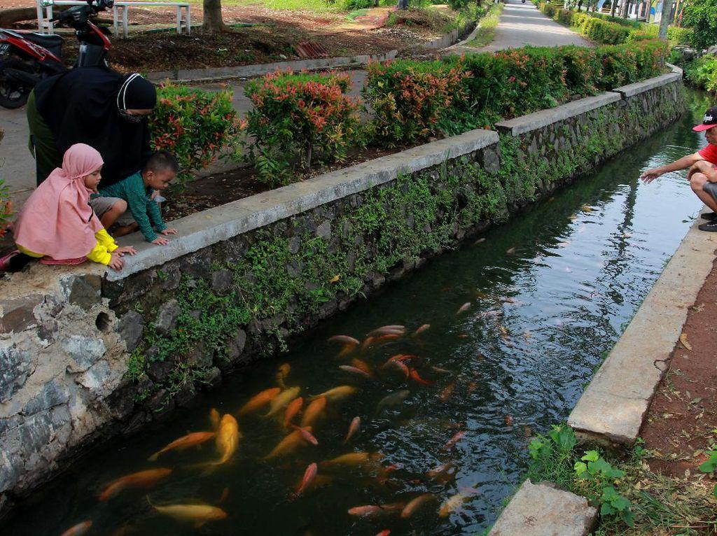 Selokan Penuh Ikan Ini Ada di Pamulang Lho