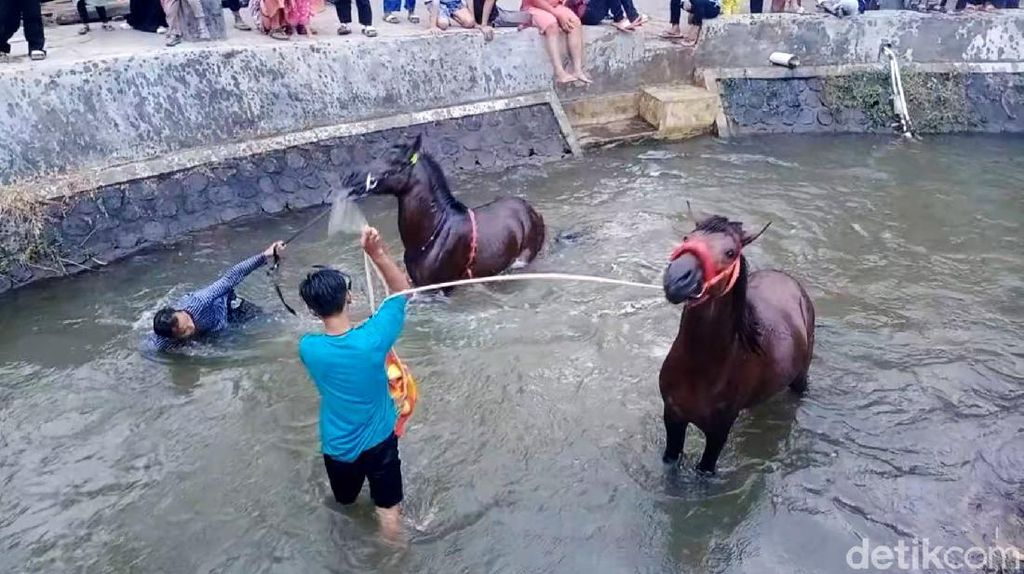 Ritual Memandikan Kuda Tiap Jumat Kliwon di Sungai Surakatiga
