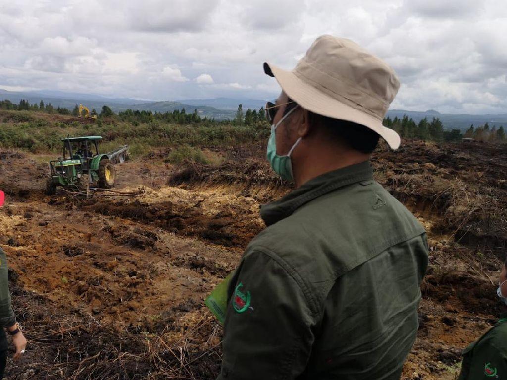 Kaitan Food Estate Jokowi dan Proyek Pangan era Soeharto