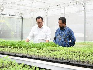 Tingkatkan Ketahanan Pangan, Wamenhan Minta IPB Kembangkan Pertanian Singkong