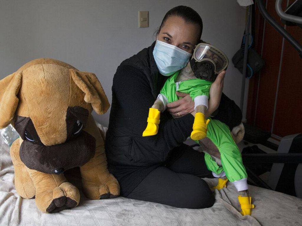 Anjing Ini Bantu Tim Medis di Meksiko Atasi Stres Gegara Corona