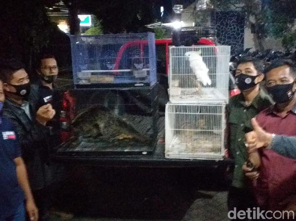 BKSDA Jatim Tangkap Warga Malang Jual Satwa Dilindungi Via Medsos