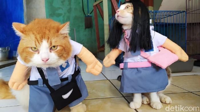 Kostum untuk kucing kesayangan karya pria asal Cirebon.