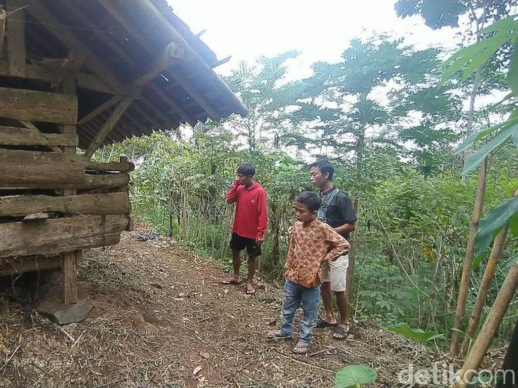 Satwa Liar Penghuni Gunung Sawal Ciamis Turun Mangsa Domba