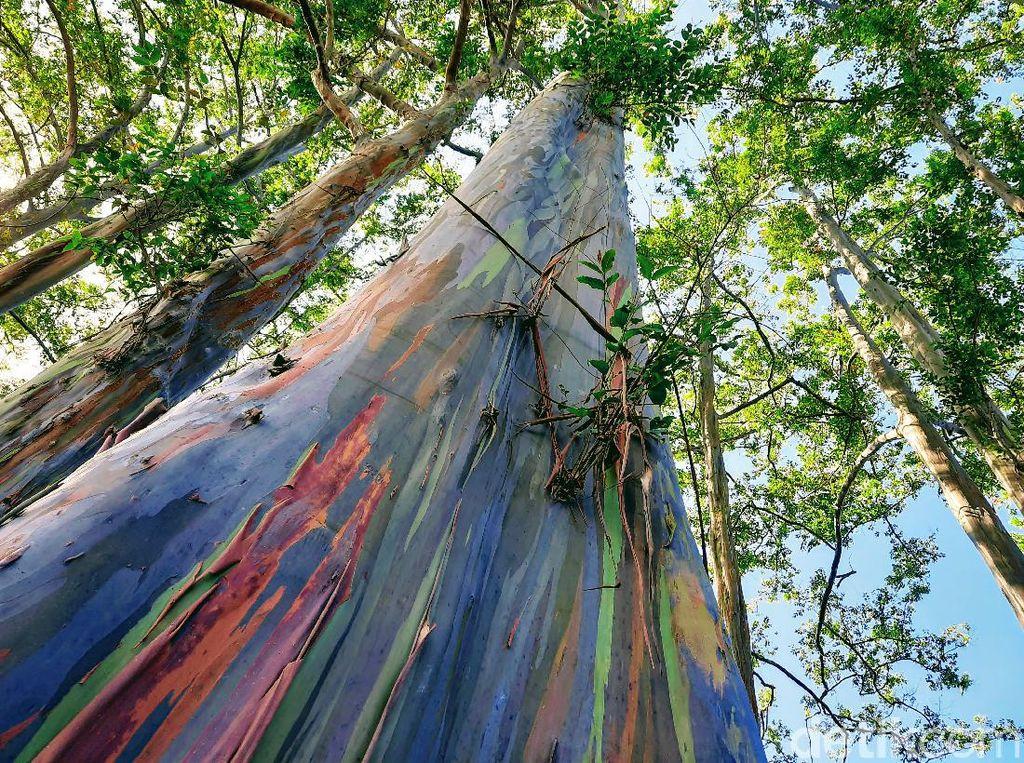 Hutan Pelangi Bondowoso Diajukan Masuk UNESCO Global Geopark