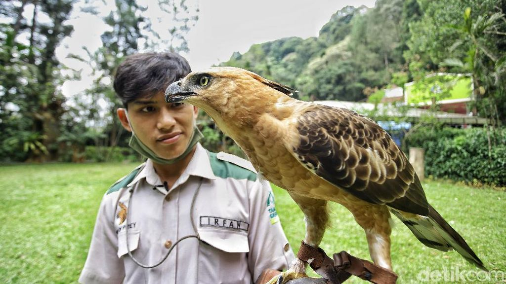 Potret Burung Garuda Bersama Pawangnya