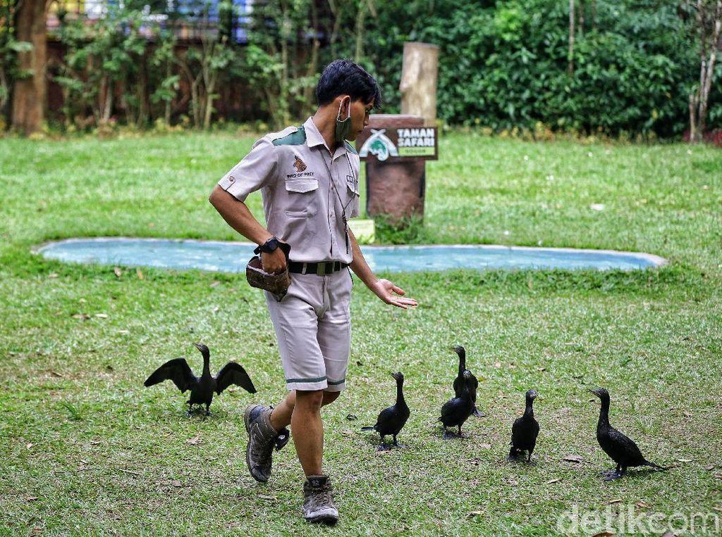 Celebrity on Vacation: Serunya Kasih Makan Burung-burung di Baby Zoo
